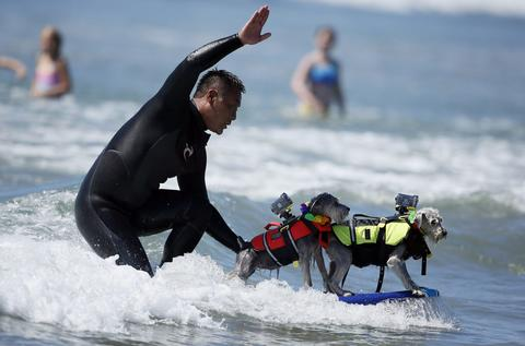 A man surfs with two dogs on his board during the Surf City surf dog competition in Huntington Beach, California, September 29, 2013.