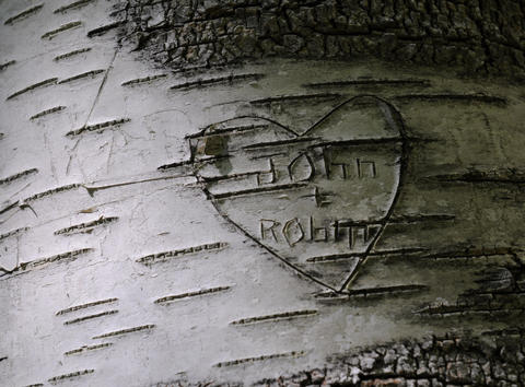 Graffito etched into a birch tree.