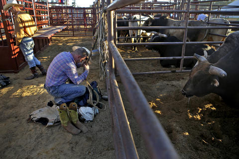 Trey Antee of Jacksonville, North Carolina prays prior to the start of Saturday's bull riding competition at the Isle of Wight County Fair. Antee won the event Saturday evening with a score of 81. Twelve riders competed Saturday evening in an attempt to ride a bull for eight seconds.