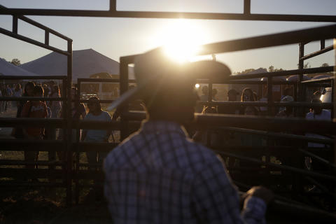 Will Jennings of Elizabeth City, North Carolina watches over the bulls as a crowd starts to gather to watch Saturday's bull riding competition at the Isle of Wight County Fair. Twelve riders competed Saturday evening in an attempt to ride a bull for eight seconds.