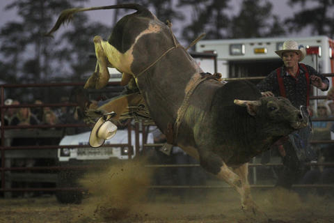 Chris Haigh's hat flies to the ground after being bucked off by Navaho Blanket during Saturday's bull riding competition at the Isle of Wight County Fair. Twelve riders competed Saturday evening in an attempt to ride a bull for eight seconds.
