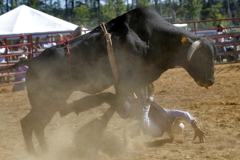 Ty Morningstar winds up beneath the bull after being bucked off during Sunday's bull riding competition at the Isle of Wight County Fair. Fifteen riders competed Sunday afternoon in an attempt to ride a bull for eight seconds.
