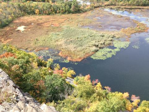 The bogs of Meriden's Black Pond.