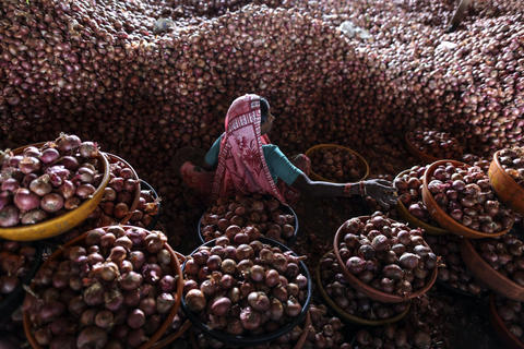 A laborer sorts freshly-harvested onions in Lasalgaon, India, September 20, 2013.