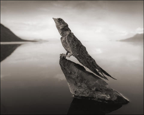 A calcified swallow from Lake Natron. The salty lake is an inhospitable place; algae sometimes give the water a pinkish tinge, but not much else lives there. Illustrates MUMMY-BIRDS (category l), by Max Ehrenfreund (c) 2013, The Washington Post. Moved Tuesday, October 22, 2013.