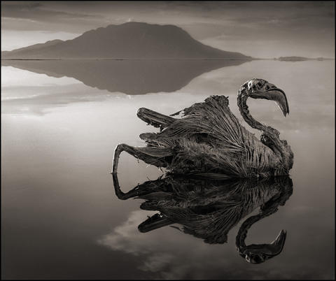 A calcified flamingo; Lake Natron¿s chemistry is a result of Ol Doinyo Lengai, the world¿s only active volcano of its kind. It spews a lava containing sodium bicarbonate, or baking soda. Illustrates MUMMY-BIRDS (category l), by Max Ehrenfreund (c) 2013, The Washington Post. Moved Tuesday, October 22, 2013.