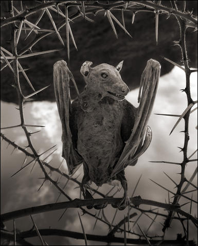 A calcified bat; the photos of the birds found in Tanzania¿s Lake Natron appear in Brandt¿s new book, ¿Across the Ravaged Land.¿ Illustrates MUMMY-BIRDS (category l), by Max Ehrenfreund (c) 2013, The Washington Post. Moved Tuesday, October 22, 2013.