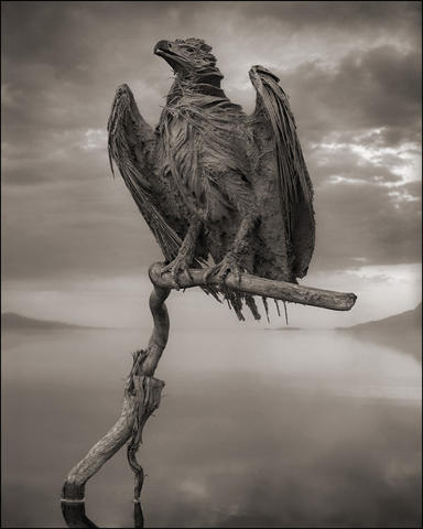 "Photographer Nick Brandt recovered birds from the shores of Lake Natron in Tanzania, placed the animals in ""living positions"" in an attempt to bring them back to ""life,¿ and photographed them. The shallow lake¿s chemistry preserves the bodies of the dead, like the fish eagle here, encrusting them in salt. Illustrates MUMMY-BIRDS (category l), by Max Ehrenfreund (c) 2013, The Washington Post. Moved Tuesday, October 22, 2013."