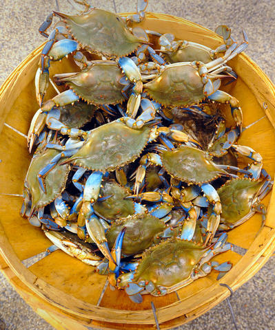 Nothing says Maryland like a bushel of crabs. Take it to the next level by dressing up as a Maryland crab for Halloween. The best part? You have two color options: red and blue.