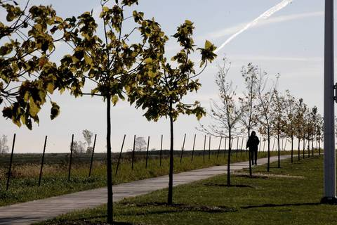 A walker uses the path lined with newly planted trees on the day the newly finished South Lake Shore Drive between 79th Street and Ewing Ave in Chicago opened to traffic.