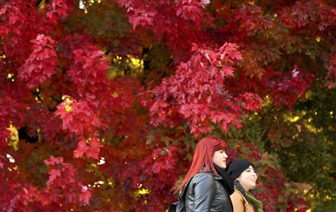 Some trees in Millennium Park display their fall colors, while others stay green.