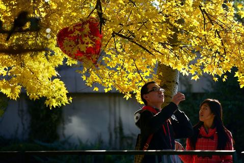 A couple walks along a road holding a balloon in Beijing on November 3,2013. Autumn has arrived in the city bringing with it the peak tourist season and tens of thousands of cashed up domestic tourists.