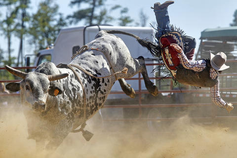 Dusty Muncy of Polk City, Florida flies through the air after being bucked off a bull during Sunday's bull riding competition at the Isle of Wight County Fair. Fifteen riders competed Sunday afternoon in an attempt to ride a bull for eight seconds.