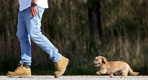 Julie rushes to keep up with owner Frank Mishka Wednesday afternoon during a walk at the Denbigh Boat Ramp.