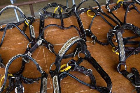 Gold-plated show harnesses are laid out during a preview of the upcoming live auction at the Rita Crundwell ranch in Dixon, Illinois.