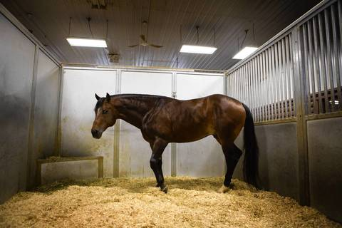 """""""Good I Will Be,"""" a performance stallion, is expected to draw the most money at the auction of Rita Crundwell's assets."""