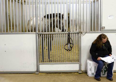 """""""Unforgettable"""" watches a potential buyer during a preview of the upcoming live auction at the Rita Crundwell ranch in Dixon, Illinois"""