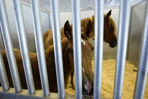Two horses reside in a stall of the horse ranch of Rita Crundwell in Dixon, Illinois. The ranch, which housed almost 270 horses, was primarily used for breeding.