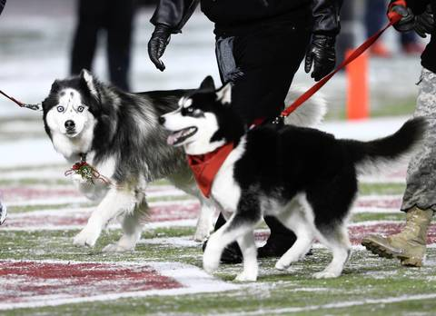 Diesel (left) enjoys the last game as a team mascot during the first half.
