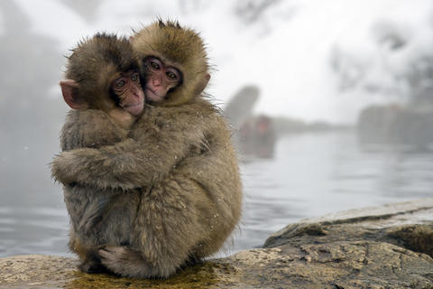 "Japanese macaque babies huddle together next to a hot springs in ""One Life"" airing on Nat Geo WILD. Japanese macagues also are called snow monkeys."