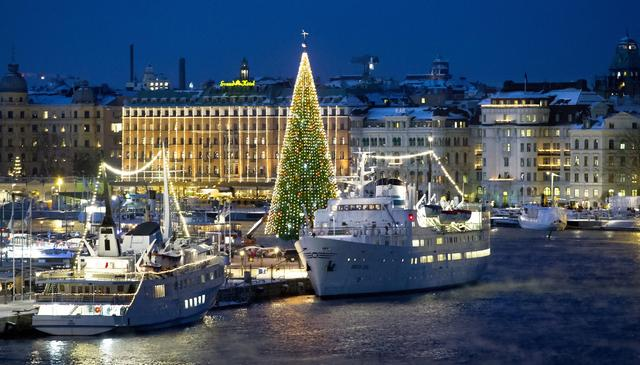 A 36-meter high Christmas tree is lighted up in central Stockholm, Sweden, on December 02, 2012. The tree is the worlds tallest Christmas tree made solely out of fir tree.