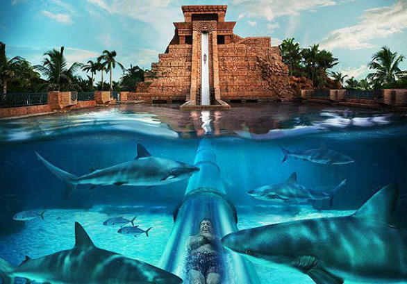 The newest resort in the water park-centric hotel chain will include water slides, rapids rides and lazy rivers along with an aquarium. The Atlantis water parks in Dubai and the Bahamas feature central temple icons with tube slides that pass through sea life-filled pools.