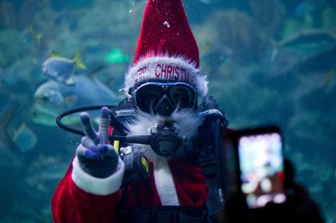 A diver in a Santa Claus outfit from the KLCC Aquaria poses for a visitor as he swims with fish inside a tank in Kuala Lumpur on December 17, 2013. Santa Claus has become a main attraction for visitors to the underwater park where he feeds fish at different hours of a day in conjunction with Christmas festivities.