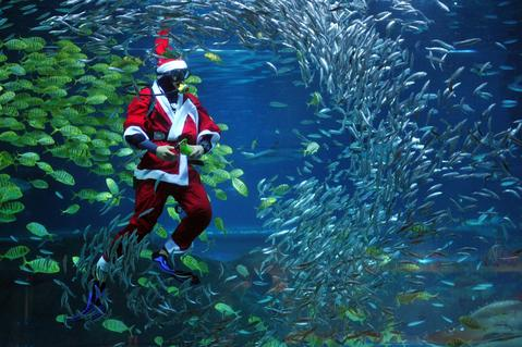 A diver dressed in a Santa Claus costume swims with fish at the Coex Aquarium in Seoul on December 20, 2013. The aquarium runs the event during the Christmas season.