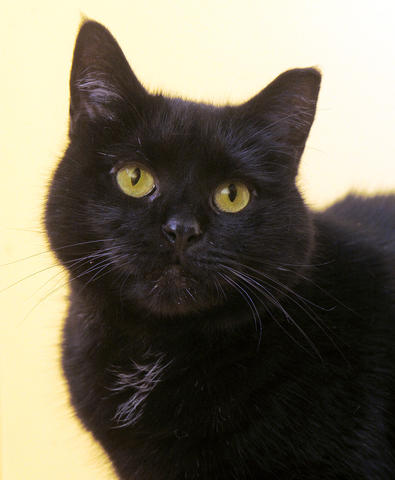 Inky is a chatty kitty who always has something to say. Found wandering around the Maryland SPCA, he spends his days at the shelter looking out the windows and keeping an eye on the squirrels and birds outside. Inky's adoption fee has been waived, thanks to a donor.