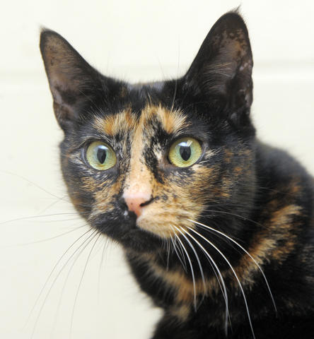She loves sharing kisses and playful head butts. Just 3 years old, she has been at BARCS since September with her brother, Darkness. They would both love to find a forever home in time for Christmas.