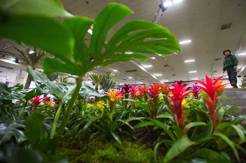 A worker stands in the plant and flower pavilion during preparations for the Green Week international food, agriculture and horticulture fair in Berlin, January 15, 2014.