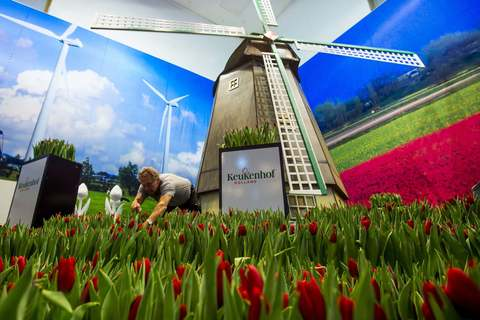 A man arranges tulips at the Dutch pavilion during preparations for the Green Week international food, agriculture and horticulture fair in Berlin, January 16, 2014.