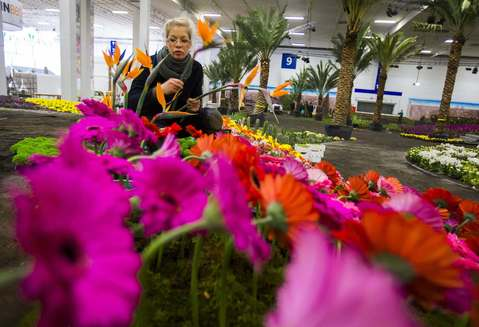 A woman plants flowers at the plant and flower pavilion during preparations for the Green Week international food, agriculture and horticulture fair in Berlin, January 15, 2014.