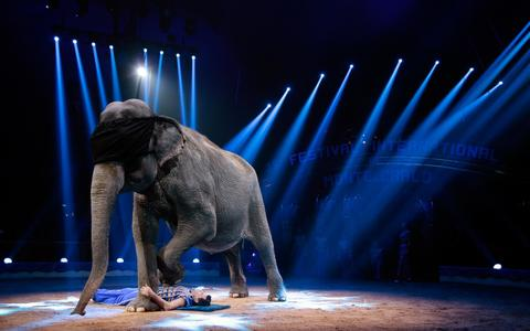 Joy Gartner performs with an elephant during the Award Gala evening of the 38th International Circus Festival of Monte Carlo in Monaco on January 21, 2014.