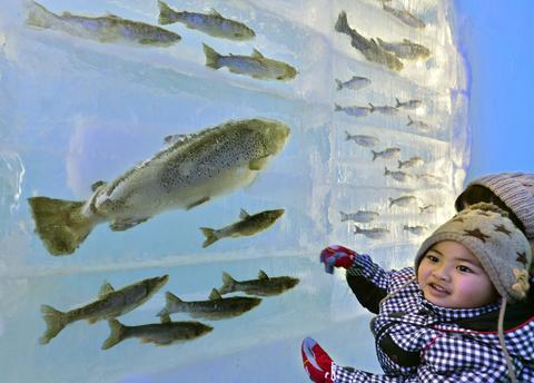 A child looks at frozen fish displayed in the ice at the Chitose-Lake Shikotsu Ice Festival in Chitose on January 24, 2014.