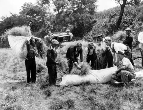 Bonus marchers gather hay for their beds in a nearby field on June 4, 1932. The veterans were in Washington demanding payment of their war bonuses from Congress.