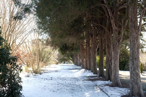 This covered path under cedars in Alice Ryan's Knightly gardens is 10 degrees cooler than the rest of the garden in summer. In winter, there is protection from wind.