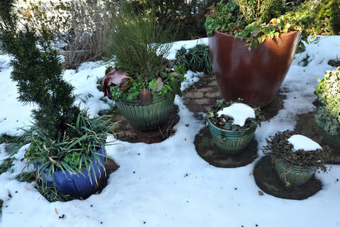 Pots were filled in late October with evergreen perennials, unusual dwarf conifers, and hardy succulents for the patio of Chris Killian's Annapolis home.