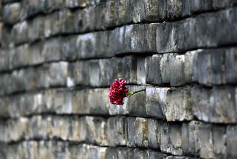 A carnation rests in a barricade in Kiev's Independent Square on Monday.