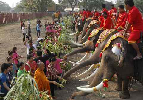 "Elephants enjoy a ""buffet"" of fruit and vegetables during Thailand's National Elephant Day in the ancient Thai capital Ayutthaya March 13, 2014."