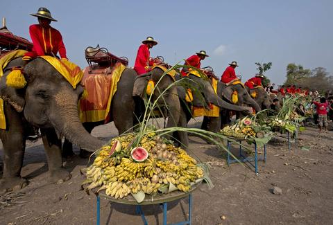 "Elephants eat platters of fruit during the elephant banquet to mark ""National Elephant Day"" in Ayutthaya province on March 13, 2014."