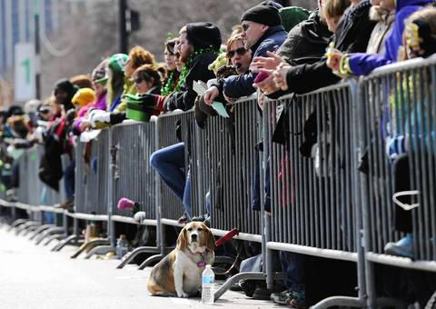 A dog gets an unobstructed view of the St. Patrick's Day Parade on Columbus Drive, in Chicago.