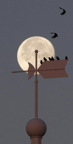 Starlings gather atop the cupola of Warwick River Hall at Christopher Newport University as the moon sets in the west and the sun begins to rise early Thursday.
