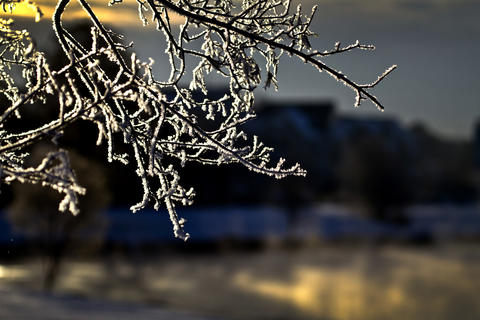 Snow coats tree branches along Brick Kiln Road in Newport News as temperatures reached four degrees this morning.
