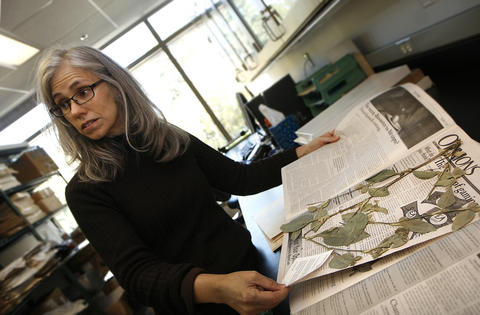 The Herbarium of the College of William and Mary is a repository of dried and pressed plant specimens that are used extensively in worldwide research.  Curator Beth Chambers works on archiving a sample sent from the University of Richmond as part of a research project.