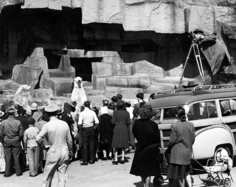 The WGN-TV mobile unit shoots pictures of the polar bears at Brookfield Zoo, circa April 23, 1948.