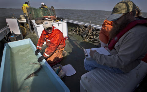 Patrick McGrath and Eric J. Hilton record data on a Sturgeon pulled out of the James River on Tuesday.