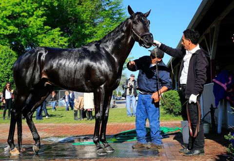 Kentucky Derby contender Dance With Fate is bathed after working out.