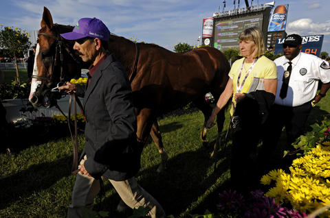 California Chrome leaves the winner's circle after winning the Preakness Stakes.