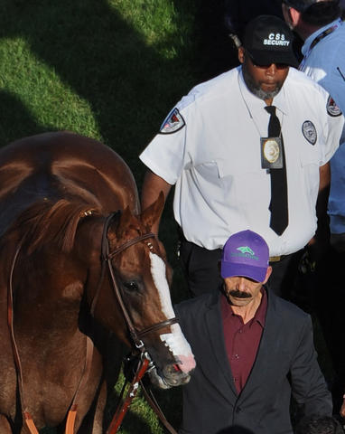 California Chrome is escorted from the winner's circle by groom Raul Rodriguez and security guard Damon Lann after winning 139th Preakness.